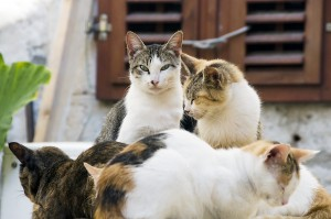 Cat Behavior In A Multi Cat Household