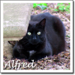 Cat Pictures Alfred