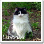 Cat Pictures Liberty