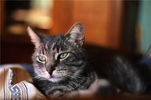 Cat Training | Cat Behavior | Cats | Cat