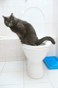 Cat Training On Toilet