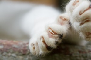 Cat Health Declawing