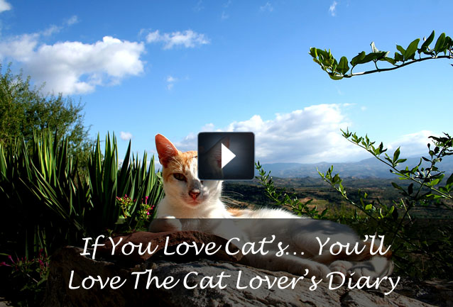 cat lover s diary home of the cat lover s diary movie