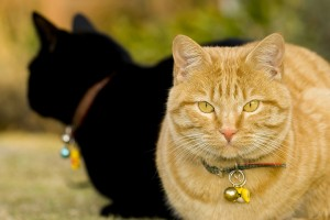 Cats | Cat Care | Cat Behavior | Kittens | Pets