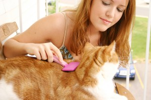 Cat Grooming | Cat Care | Cat Health