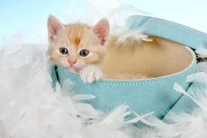 Kitten Care | Kitten Health | Kitten Training