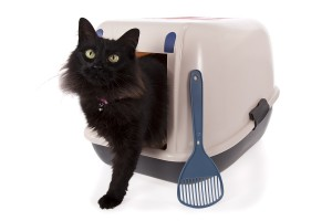 Cat Training | Stop Cat Peeing Outside Litter Box