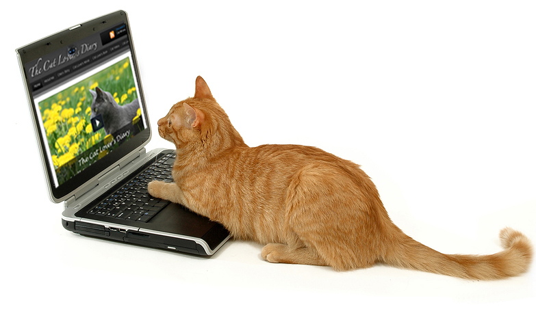 Cat Photo Cat Surfing Internet