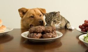 Table Foods You Should Not Be Feeding Your Pet