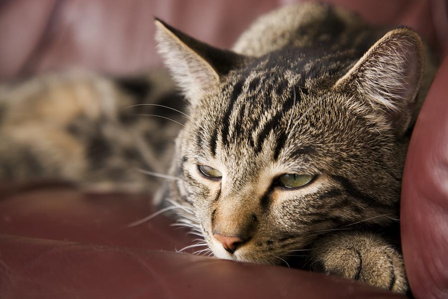 cat hairballs treatment