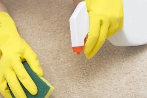 Get Cat Urine Out of Carpet