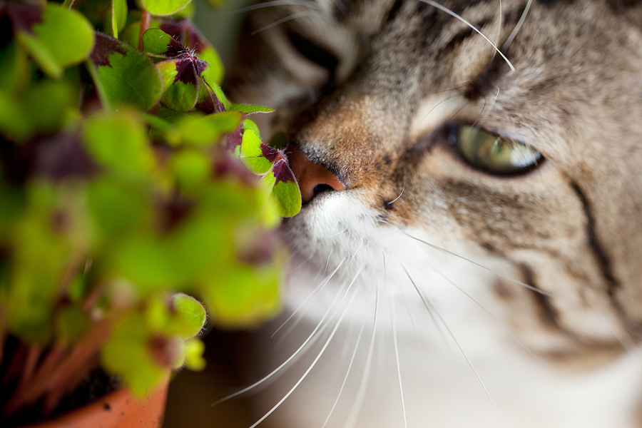 Plants that are toxic to cats cat care Houseplants not toxic to cats